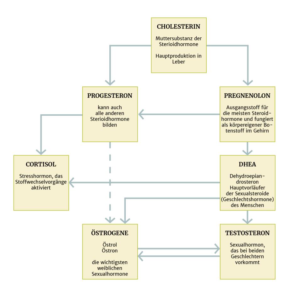 Hormontherapie: Bioidentische, natürliche und körpereigene Hormone – Hormonsynthese Infografik